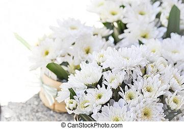 chrysanthemum morifolium Ramat or chrysanthemum flower in...