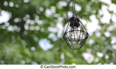old light bulb with branches of tree - Dirty old light bulb...