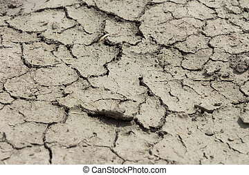parched earth in a field