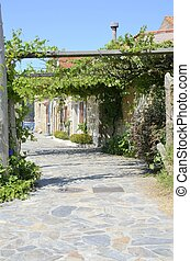 Gallery made with grape leaves - Pathway in Gallery made...