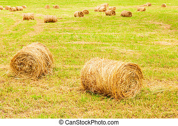 Rolls of hay lie in a collapsed large sloping field....