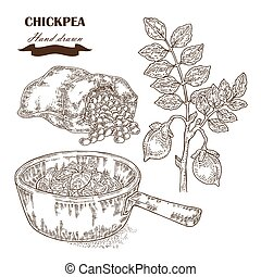 Hand drawn chickpea plant. Seeds, chickpea soup and sack with pea. Vector illustration
