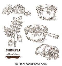 Hand drawn chickpea plant. Seeds, chickpea soup, sauce and sack with pea. Vector illustration