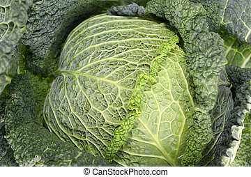 Kale is one of the healthiest veget - Kale or leaf cabbage...