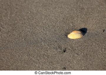 Cockle on the sandbank