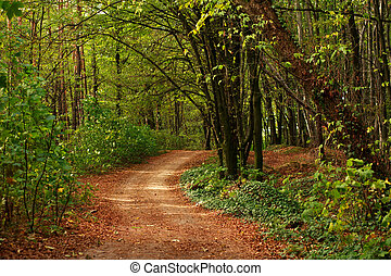 Path in forest with fallen leaves on green trees