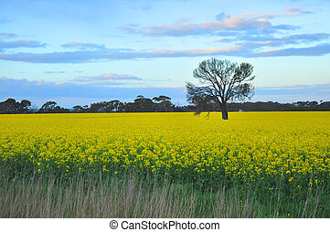 Lone tree - A lone tree stands in a meadow of yellow...