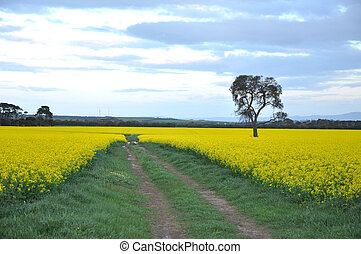 Lone tree - A lone tree stands in a meadow of yellow flowers...