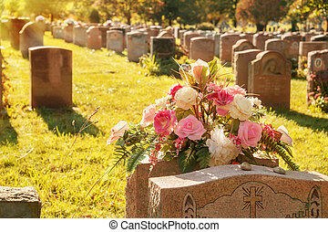Roses in a cemetery with headstones in the background (faded...