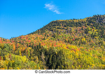 Autumn colors on Chic-Chocs mountains in Gaspesie, Quebec,...