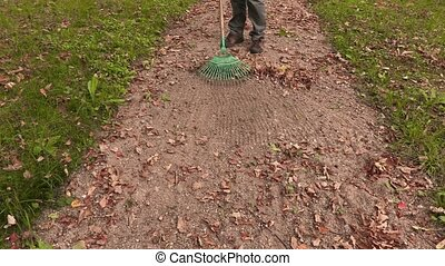 Man with rake collect leaves on path in park