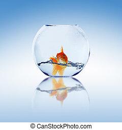 Goldfish and Aquarium Collage
