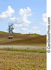 Barn in field