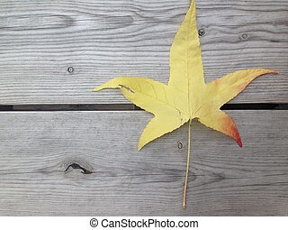 Autumn leaf in grainy wood background with copy space