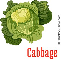 Cabbage vegetable vector icon - Cabbage vegetable icon....
