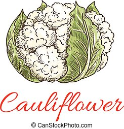 Cauliflower vegetable icon. Isolated leafy cauliflower....