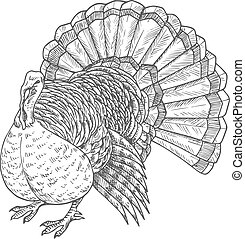 Thanksgiving turkey vector sketch isolated icon