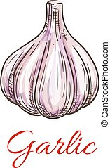 Garlic vegetable sketch icon