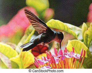 Emerald humming bird collecting pollen from exotic flower