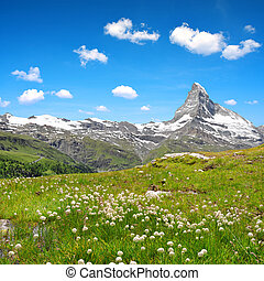 Views of the mountain Matterhorn with cottongrass on meadow...