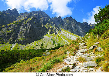 Western Carpathians - Beautiful summer mountain landscape in...