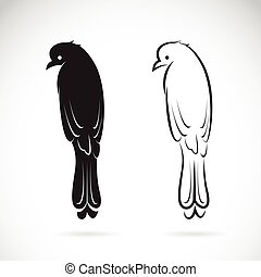 Vector of drongo bird on white background. Birds Icon.