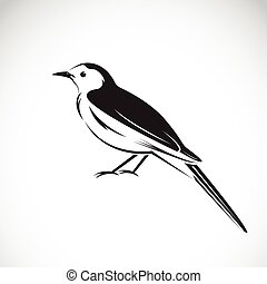 Vector of magpie design on white background. Bird Icon.