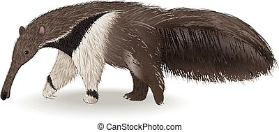 Cute anteater isolated on white bac - Vector illlustration...