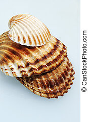 seashells - a pile of seashells on a water background