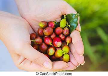 Coffee beans in woman hands