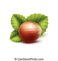 Full Unpeeled Hazelnut with Leaves Isolated - Vector Full...