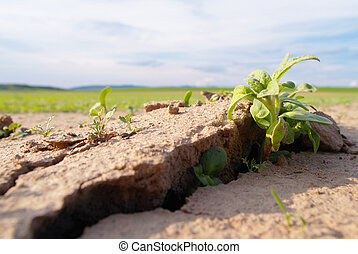 dry land with plant - Dry land with fresh green plant grow...