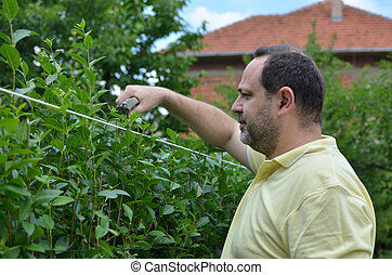 Cutting Hedge with Shears