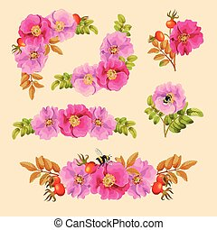 Set of decorative elements with dog rose - Vector set of...