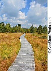 Wood path through the peat bog - Wooden path through the...