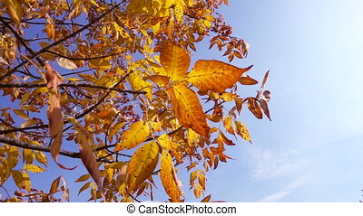 Tree with golden leaves against blue sky, slow motion