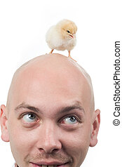 Baby bird on head - Image of bald man with chirping chick on...