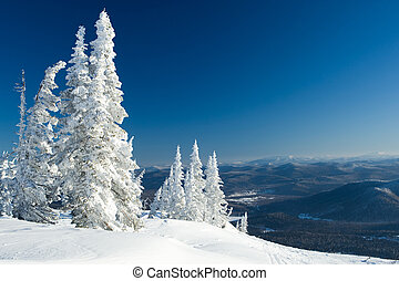 Winter panorama - View of snow-covered trees with blue hills...