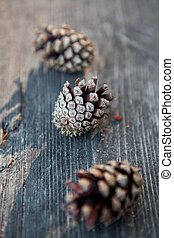 Pinecones - Close-up of natural pinecones outdoors in a...