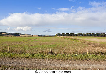 yorkshire wolds farming scenery - scenery in farmland of the...