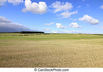 hilltop copse - a hilltop copse and hedgerows in...