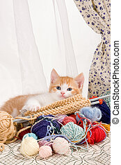 Knitting kitten - Six weeks old kitten being naughty with...