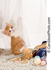 Kitten in the curtains - Six weeks old kitten hanging in the...