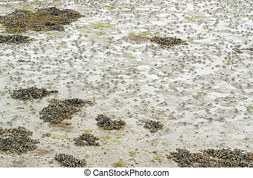 wet ebb tide detail - full frame wet beach detail at ebb...
