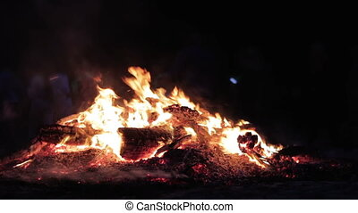 Big Campfire from Branches Burn at Night in the Forest...