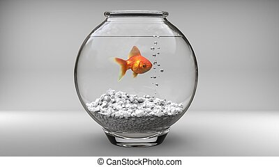 Gold fish in a small fish bowl