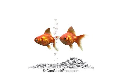Two goldfish swimming side by side