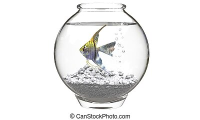Angelfish in small fishbowl