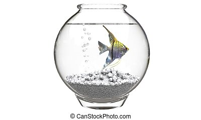 Angelfish in fishbowl with white pebbles and air bubbles