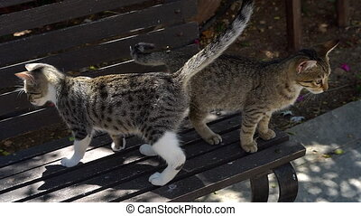 two funny kitten sitting friendship